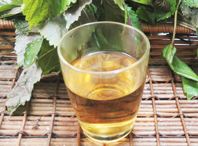 Uống nước lá tía tô làm giảm thời gian đau đẻ
