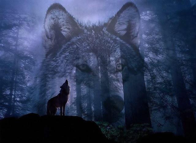 Nằm mơ thấy chó sói là điềm gì
