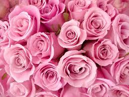 mơ thấy màu hồng