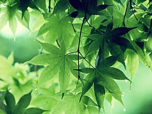 Mơ thấy cây cối báo hiệu điềm tốt hay điềm xấu