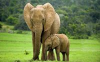 Mơ thấy voi là điềm gì?