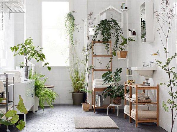 3 loại cây phong thủy cho phòng tắm
