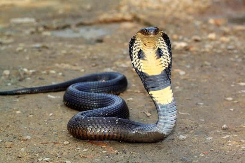 Mơ thấy bắt rắn điềm báo gì đánh số gì chắc trúng?
